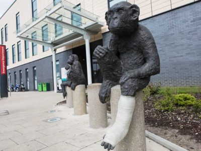 Statues of injured monkeys outside the Emergency Department